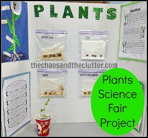 Plants Science Fair Project