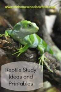 reptile-study-ideas-and-printables