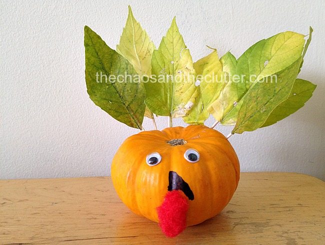 mini pumpkin turkey