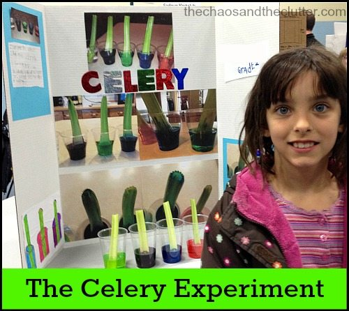 the celery experiment