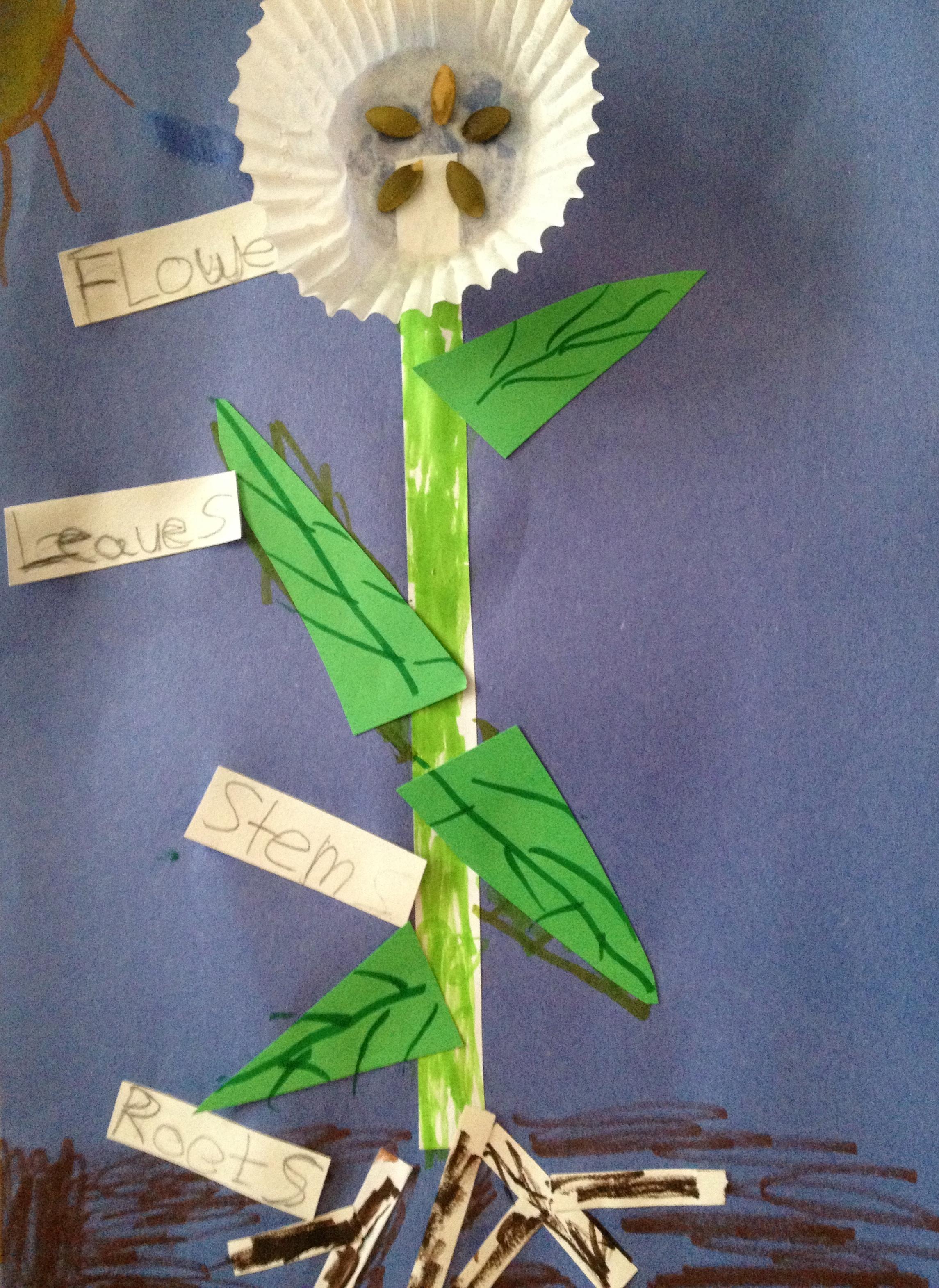 Plants Science Fair Project
