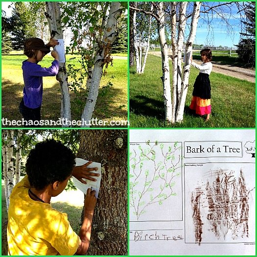 Tree Notebooking