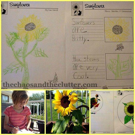sunflower notebooking